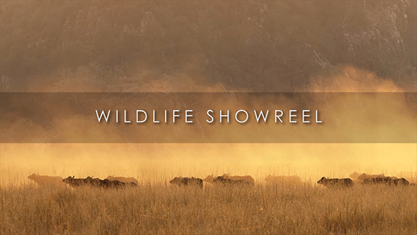 Wildlife Showreel